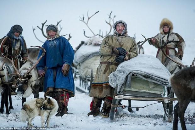 Những khoảnh khắc đời thường của Nenets: Bộ lạc du mục chuyên ăn thịt sống, uống máu tuần lộc - Ảnh 1.