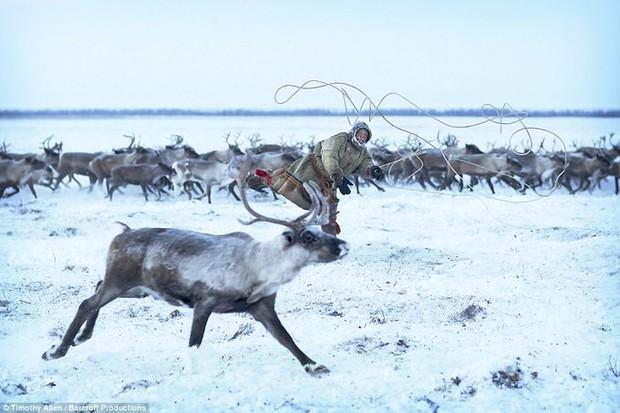 Những khoảnh khắc đời thường của Nenets: Bộ lạc du mục chuyên ăn thịt sống, uống máu tuần lộc - Ảnh 16.