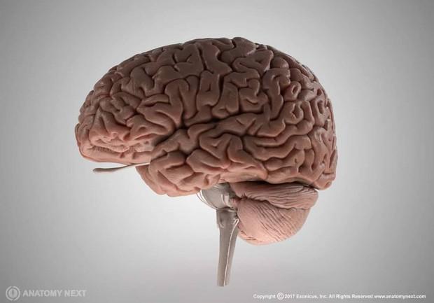 7 sự thật đầy bất ngờ về cơ thể người giúp bạn lý giải được rất nhiều điều trong cuộc sống - Ảnh 3.