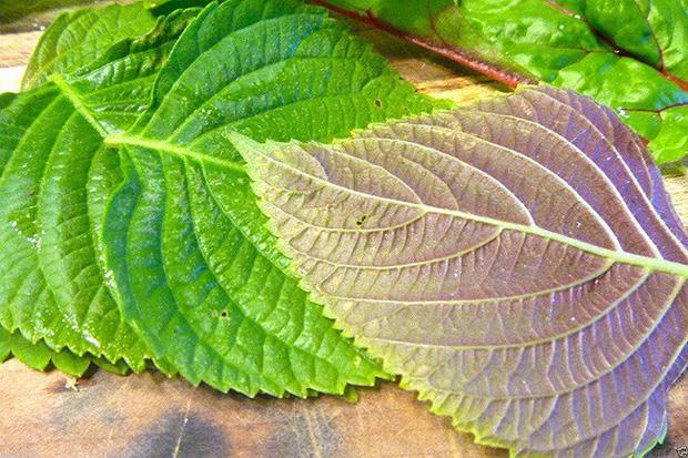 Loại rau thân quen này không chỉ là gia vị, bạn có thể sử dụng làm thuốc chữa bệnh nếu biết cách - Ảnh 2.