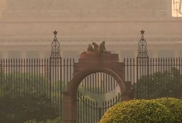 Khỉ mặt đỏ đại náo văn phòng chính phủ Ấn Độ - Ảnh 1.