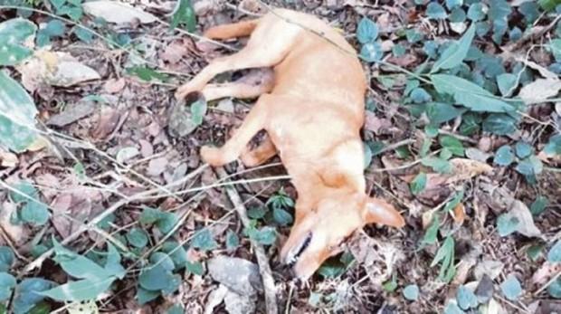 Chó hy sinh cứu gia đình chủ khỏi trăn hung dữ dài tận 6m - Ảnh 2.
