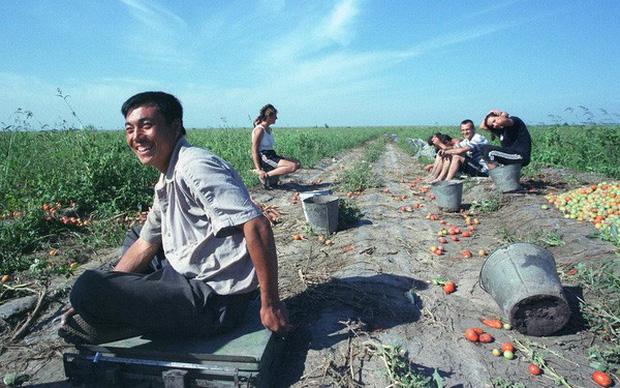 Xu hướng mới của thanh niên Trung Quốc: 7 triệu người gồm cả Thạc sĩ và Tiến sĩ đua nhau bỏ thành phố, đổ xô về quê làm nông dân - Ảnh 1.