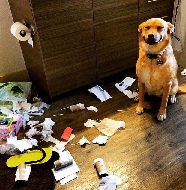Ảnh: Khoảnh khắc hết hồn của boss chó mèo khi đang phá phách thì sen đột ngột về nhà - Ảnh 9.