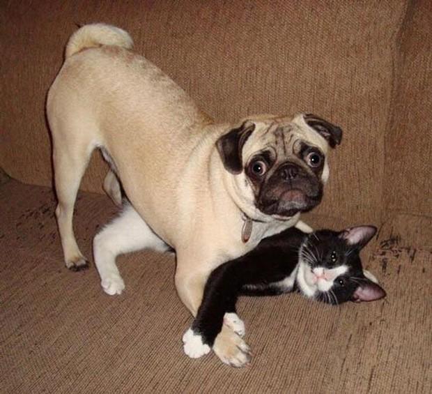 Ảnh: Khoảnh khắc hết hồn của boss chó mèo khi đang phá phách thì sen đột ngột về nhà - Ảnh 10.