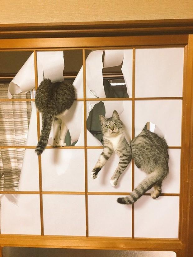 Ảnh: Khoảnh khắc hết hồn của boss chó mèo khi đang phá phách thì sen đột ngột về nhà - Ảnh 6.