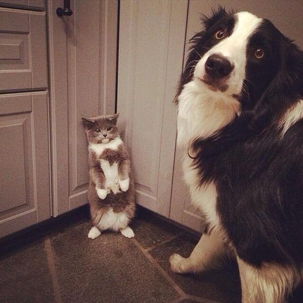 Ảnh: Khoảnh khắc hết hồn của boss chó mèo khi đang phá phách thì sen đột ngột về nhà - Ảnh 1.
