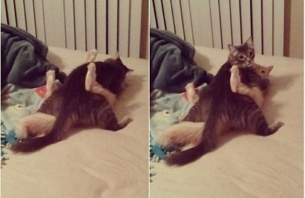Ảnh: Khoảnh khắc hết hồn của boss chó mèo khi đang phá phách thì sen đột ngột về nhà - Ảnh 4.