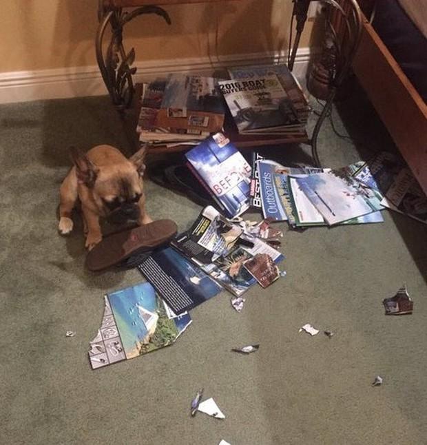 Ảnh: Khoảnh khắc hết hồn của boss chó mèo khi đang phá phách thì sen đột ngột về nhà - Ảnh 7.
