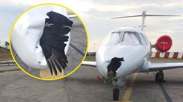Tưởng chừng chỉ là ảo ảnh thông thường nhưng đây lại là giải pháp ngăn chim lạc vào sân bay vô cùng hiệu quả - Ảnh 2.
