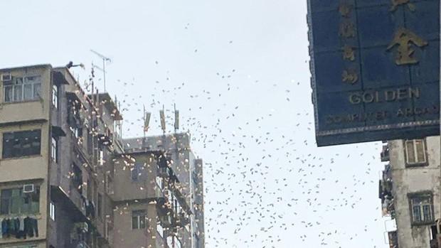 Tiền trên trời rơi xuống như mưa khiến khu phố nghèo ở Hồng Kông rơi vào hỗn loạn - Ảnh 3.