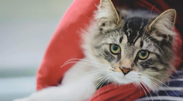 Câu chuyện chú mèo đi hoang hơn 1200km rồi trở về nhà theo cách quá bất ngờ lan truyền mạnh trên MXH - Ảnh 1.