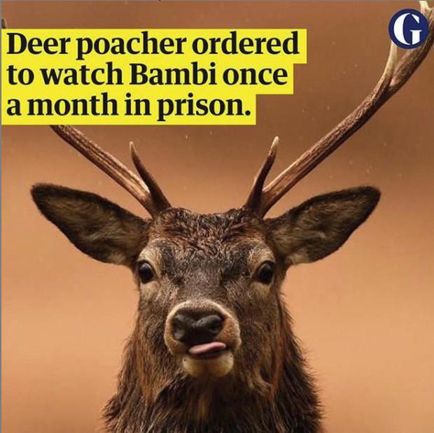"""Chuyện kì quặc ở Mỹ: Phim hoạt hình """"Bambi"""" được dùng để trừng phạt... tù nhân - Ảnh 1."""