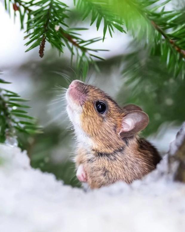 Những bức ảnh chứng minh khu rừng cổ tích ở Phần Lan là có thật - Ảnh 15.