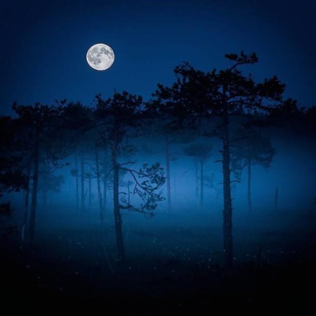 Những bức ảnh chứng minh khu rừng cổ tích ở Phần Lan là có thật - Ảnh 5.