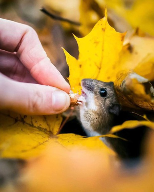 Những bức ảnh chứng minh khu rừng cổ tích ở Phần Lan là có thật - Ảnh 6.