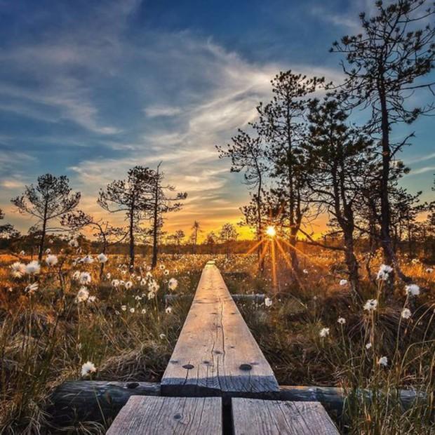 Những bức ảnh chứng minh khu rừng cổ tích ở Phần Lan là có thật - Ảnh 10.