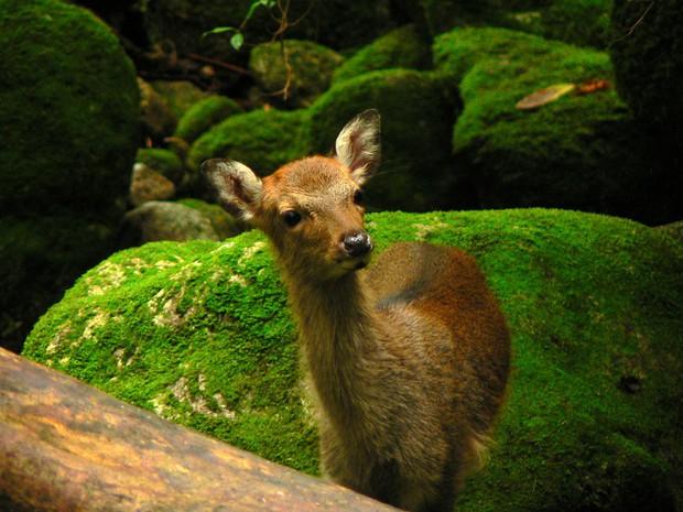 Mãn nhãn với khu rừng cổ tích đẹp lộng lẫy trên hòn đảo mưa không nghỉ ở Nhật Bản - Ảnh 6.