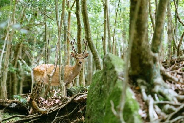 Mãn nhãn với khu rừng cổ tích đẹp lộng lẫy trên hòn đảo mưa không nghỉ ở Nhật Bản - Ảnh 5.