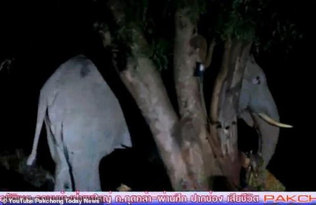 Kinh hoàng cảnh voi nổi giận giẫm chết tài xế vì bị tông trúng chân - Ảnh 2.