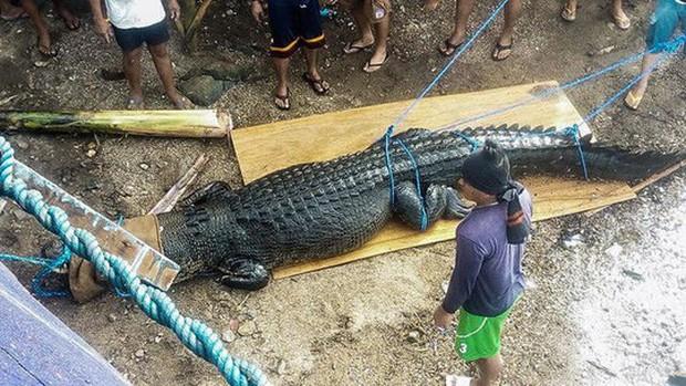 Bắt cá sấu nặng nửa tấn nghi ăn thịt người - Ảnh 2.
