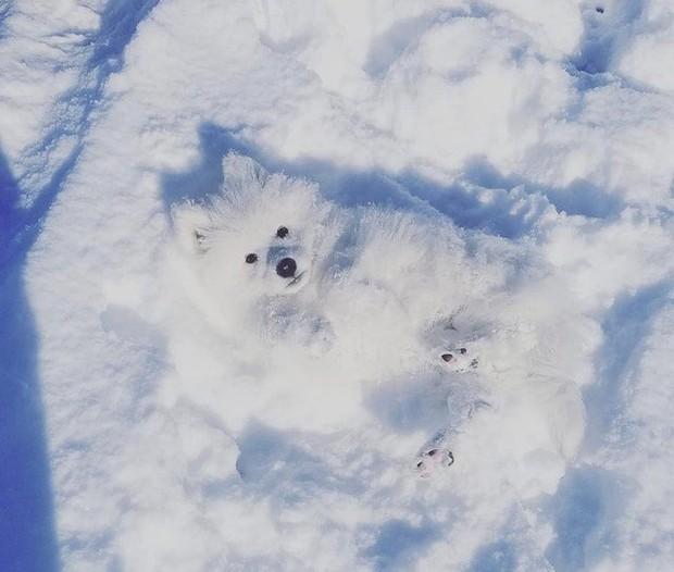 Chùm ảnh rét run: Băng tuyết chỉ lãng mạn trên phim, thực tế lại lạnh lẽo buốt giá như thế này - Ảnh 6.