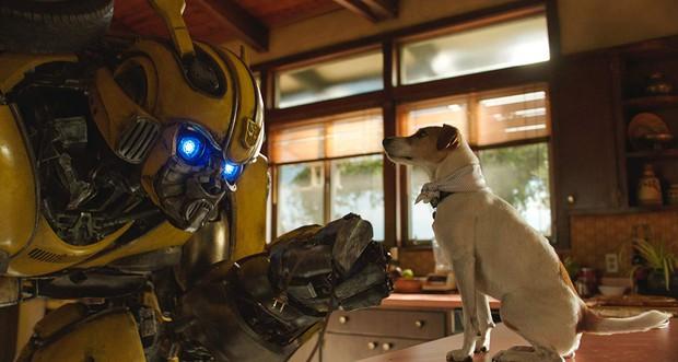 Tạo hình đã cute lạc lối, robot ong vàng Bumblebee phiên bản 2018 còn biết đốn tim cả thiên hạ - Ảnh 1.