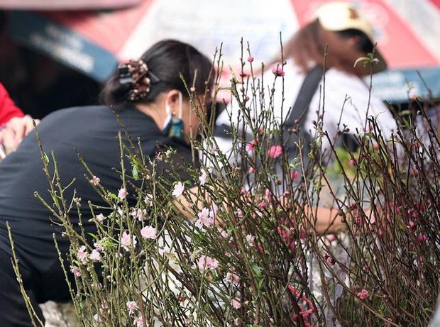 Hà Nội: Đào Nhật Tân nở sớm bung đỏ rực trong nắng đông - Ảnh 15.