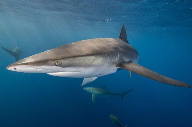 Bí ẩn loài cá mập kỳ dị, liều lĩnh ẩn nấp ngay trong miệng núi lửa - Ảnh 3.