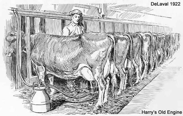 Từ khi nào con người lại uống sữa của các loài khác? Hóa ra đằng sau câu chuyện uống sữa lại ẩn chứa những sự thật cực kỳ thú vị - Ảnh 1.