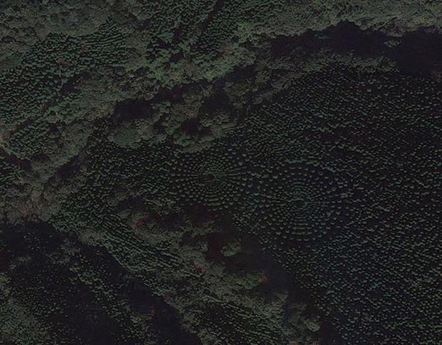 Thử nghiệm lâm nghiệp kéo dài gần nửa thế kỷ ở Nhật đã trở thành crop circles tuyệt đẹp - Ảnh 3.