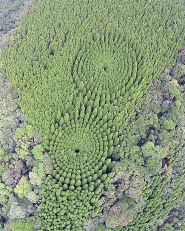 Thử nghiệm lâm nghiệp kéo dài gần nửa thế kỷ ở Nhật đã trở thành crop circles tuyệt đẹp - Ảnh 5.