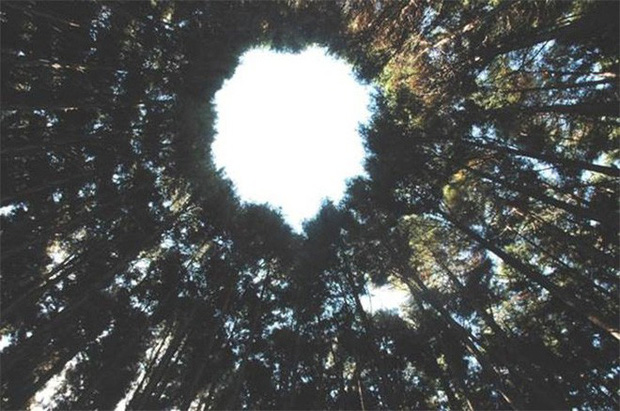 Thử nghiệm lâm nghiệp kéo dài gần nửa thế kỷ ở Nhật đã trở thành crop circles tuyệt đẹp - Ảnh 6.
