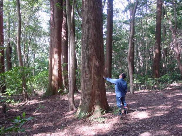 Thử nghiệm lâm nghiệp kéo dài gần nửa thế kỷ ở Nhật đã trở thành crop circles tuyệt đẹp - Ảnh 9.