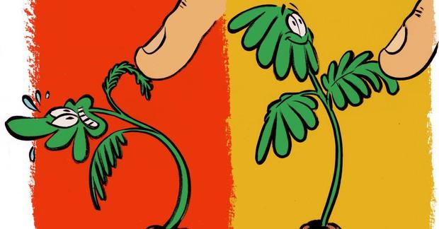 Có yêu đến mấy cũng đừng chạm vào cây, vì chúng thật sự không thích thế - Ảnh 2.