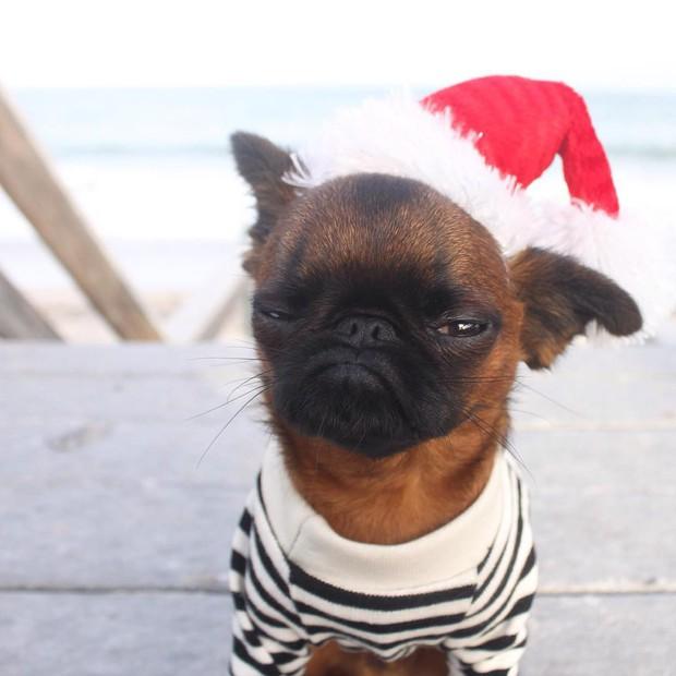 Chùm ảnh: Gương mặt chán nản đến tột cùng của các boss khi bị sen bắt cùng đón Giáng sinh - Ảnh 11.