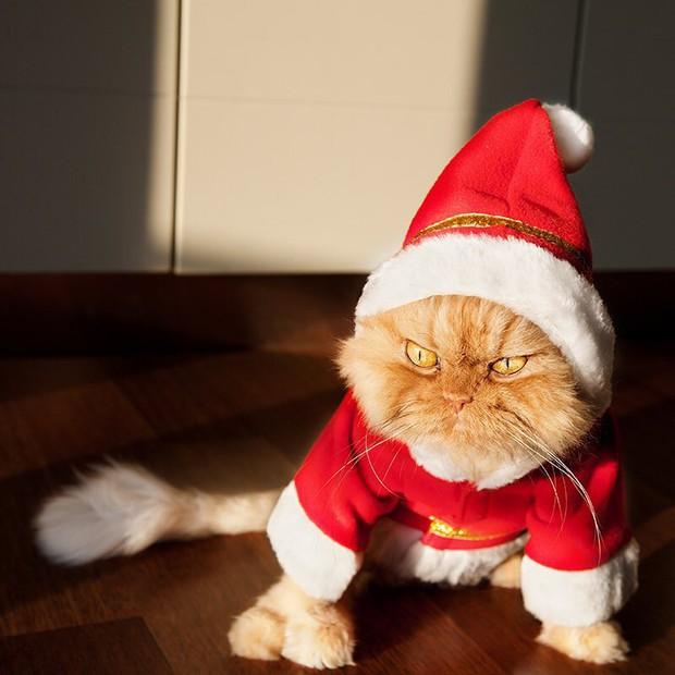 Chùm ảnh: Gương mặt chán nản đến tột cùng của các boss khi bị sen bắt cùng đón Giáng sinh - Ảnh 16.
