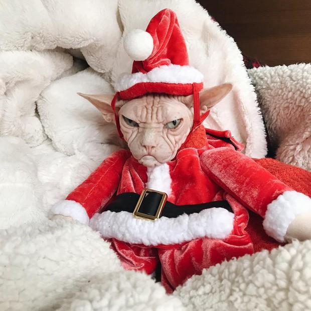 Chùm ảnh: Gương mặt chán nản đến tột cùng của các boss khi bị sen bắt cùng đón Giáng sinh - Ảnh 14.