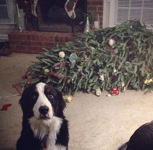 Chùm ảnh: Gương mặt chán nản đến tột cùng của các boss khi bị sen bắt cùng đón Giáng sinh - Ảnh 15.