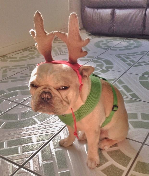 Chùm ảnh: Gương mặt chán nản đến tột cùng của các boss khi bị sen bắt cùng đón Giáng sinh - Ảnh 9.