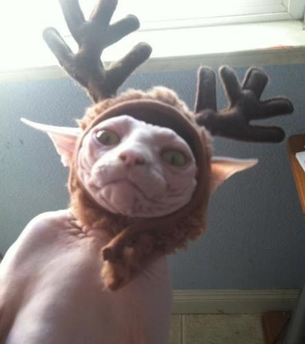 Chùm ảnh: Gương mặt chán nản đến tột cùng của các boss khi bị sen bắt cùng đón Giáng sinh - Ảnh 2.