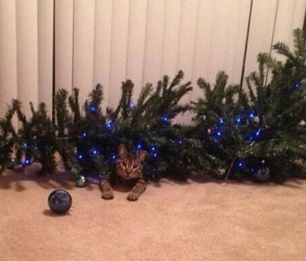 Chùm ảnh: Gương mặt chán nản đến tột cùng của các boss khi bị sen bắt cùng đón Giáng sinh - Ảnh 8.