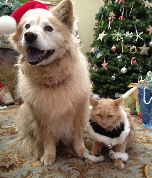 Chùm ảnh: Gương mặt chán nản đến tột cùng của các boss khi bị sen bắt cùng đón Giáng sinh - Ảnh 1.