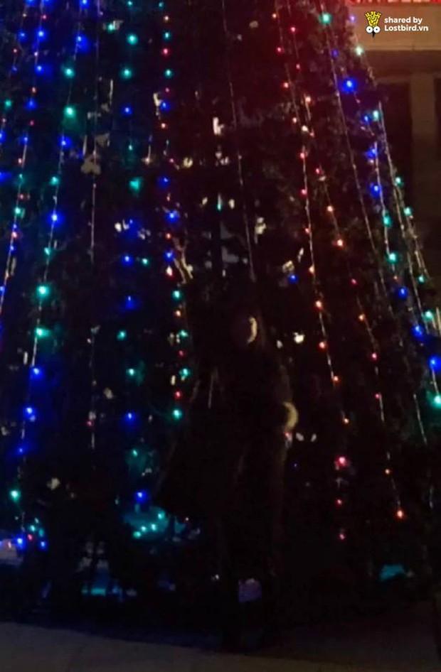 Hớn hở tạo dáng bên cây thông, cô gái bỗng tàng hình vì người chụp không có tâm - Ảnh 2.