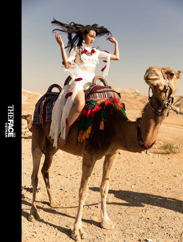 Chụp hình với lạc đà nhưng thí sinh The Face Vietnam lại không liều như Americas Next Top Model - Ảnh 1.