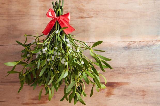Nụ hôn dưới cây tầm gửi trong lễ Giáng Sinh: tục lệ này bắt nguồn từ đâu và có ý nghĩa gì? - Ảnh 2.