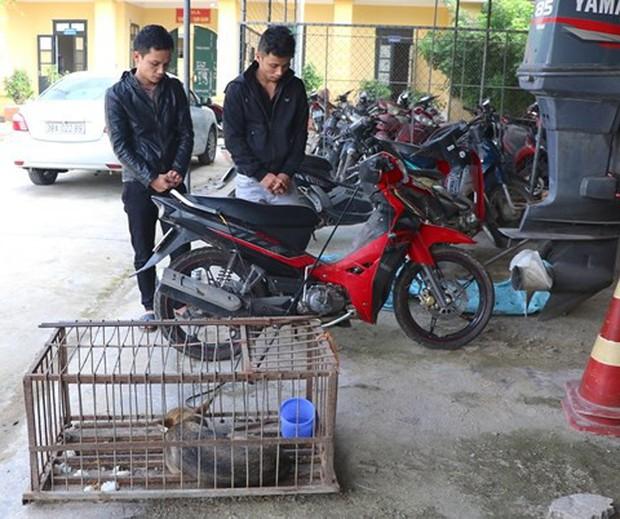 Cùng anh trai bắt trộm hàng trăm con chó bán cho... mẹ vợ - Ảnh 2.