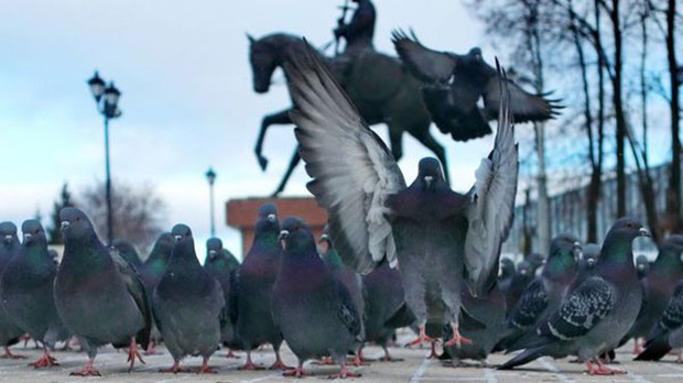 Chim bồ câu bị trục xuất vì đe dọa khách du lịch - Ảnh 1.