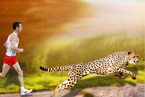 Con người dĩ nhiên không nhanh bằng loài báo, nhưng bạn có biết tại sao? - Ảnh 4.