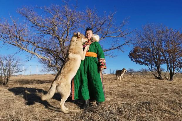 Cô gái Mông Cổ với dàn pet độc 8 con sói, 3 bạn trai đều đòi chia tay vì sợ cãi nàng sẽ bị ăn thịt - Ảnh 4.
